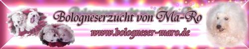 Banner Bologneser von Ma-Ro